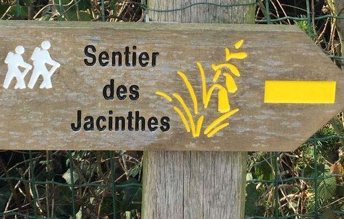 sentier des jacinthes